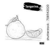 Sketch Tangerine  Fruit Citrus.