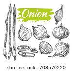 onions sketch. onion hand drawn ... | Shutterstock .eps vector #708570220