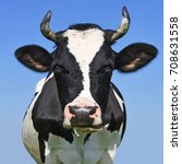 head of a cow against the sky | Shutterstock . vector #708631558
