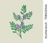 pretty botanical drawing of... | Shutterstock .eps vector #708633466