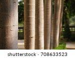 Row Of Palm Tree Trunk Closeup...