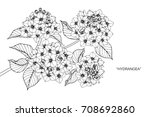 hand drawn and sketch hydrangea ... | Shutterstock .eps vector #708692860