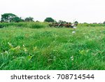 Small photo of Meadow with farm Equipment