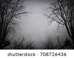 Silhouette Dead Tree At Night...