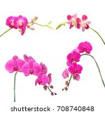 beautiful orchid isolated on... | Shutterstock . vector #708740848