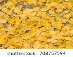 Ginkgo Leaves On The Floor...