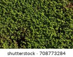 Southern Lawn Weeds In The...