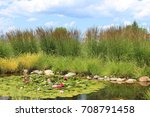 tranquil pond surrounded with... | Shutterstock . vector #708791458