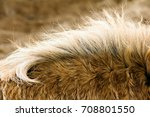 close up of the neck of a horse | Shutterstock . vector #708801550