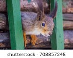 squirrel sitting on a branch... | Shutterstock . vector #708857248