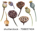 set of f poppies  seeds  lotus  ... | Shutterstock . vector #708857404