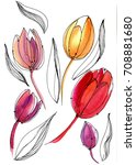 Magnificent Watercolor Tulips...