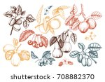 vintage collection of ripe... | Shutterstock . vector #708882370