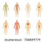 human anatomy. set of vector... | Shutterstock .eps vector #708899779