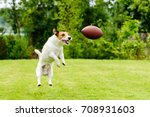 Stock photo leisure time at back yard with american football ball and pet 708931603