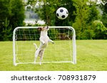 amusing goalie catching generic ... | Shutterstock . vector #708931879