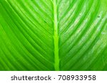large green leaf from jungle...   Shutterstock . vector #708933958