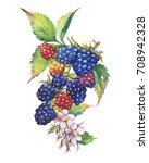 blackberry fruit  white flowers ... | Shutterstock . vector #708942328