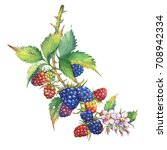 a branch with blackberry fruit  ...   Shutterstock . vector #708942334