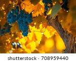 grape bunch  very shallow focus | Shutterstock . vector #708959440