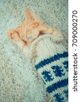Stock photo little red kitten the kitten lies on the fluffy carpet at home little kitten sleeps close up of 709000270
