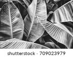 tropical jungle palm leaves ... | Shutterstock . vector #709023979