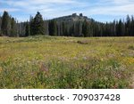 tall grass meadow  | Shutterstock . vector #709037428