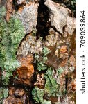 The Moss On The Tree Bark. The...