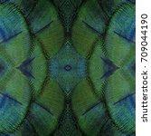 peacock fetcher for background  ...   Shutterstock . vector #709044190