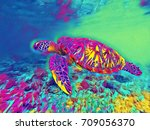 sea turtle in open sea water... | Shutterstock . vector #709056370