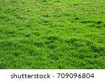 grass texture from a field | Shutterstock . vector #709096804