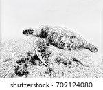 sea turtle in sea water digital ... | Shutterstock . vector #709124080