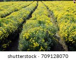 growth in the fields of... | Shutterstock . vector #709128070