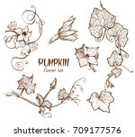pumpkin flower sketch hand... | Shutterstock .eps vector #709177576