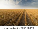 agricultural soy plantation on ...   Shutterstock . vector #709178194