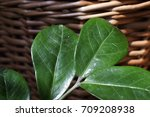 green stem in the background of
