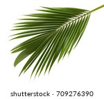 Coconut Leaves Or Coconut...