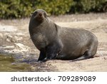 seal | Shutterstock . vector #709289089