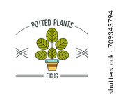 potted plant. vector... | Shutterstock .eps vector #709343794