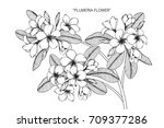 hand drawn and sketch plumeria... | Shutterstock .eps vector #709377286