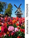 Small photo of KEUKENHOF, NETHERLANDS - MAY 9, 2017: Blooming pink tulips flowerbed in Keukenhof garden, aka the Garden of Europe, one of the world largest flower gardens & windmill & tourists. Lisse, Netherlands