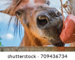 horses are eating food on a... | Shutterstock . vector #709436734