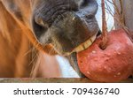 horses are eating food on a... | Shutterstock . vector #709436740