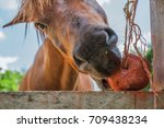 horses are eating food on a... | Shutterstock . vector #709438234
