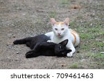 Stock photo black cat playing with white cat 709461463