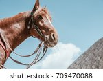 horse on mount bromo volcano ... | Shutterstock . vector #709470088