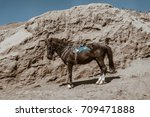 horse on mount bromo volcano ... | Shutterstock . vector #709471888
