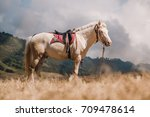 horse on savanna field at bromo ... | Shutterstock . vector #709478614