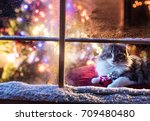 on christmas night a lovely cat ... | Shutterstock . vector #709480480