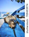 An Adorable Sleeping Sea Lion